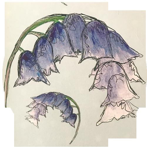 Bluebells Design